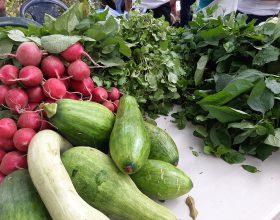 Más de 80 agricultores participan en intercambio de semillas criollas